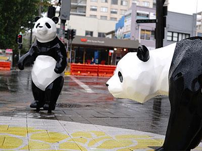 Pandas at Borrodale Road