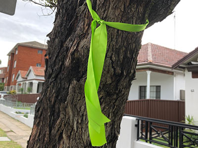 Green ribbon means tree is staying.