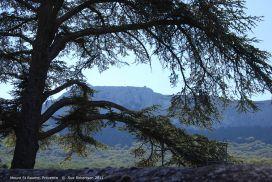 Mount-St-Baume.jpg