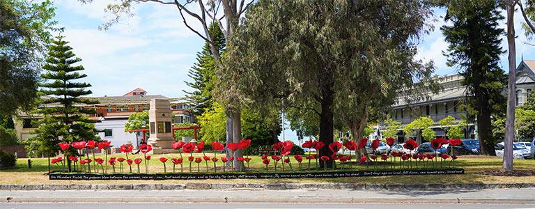 Poppies in High Cross Park, Randwick.
