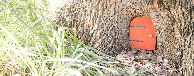 Look for the secret fairy door while you visit Fred Hollow's Reserve.