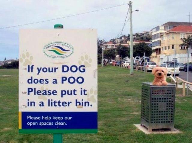 A dog in a bin