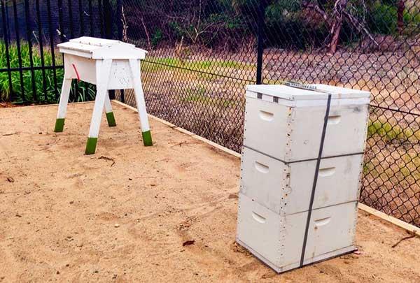 Native Stingless Bee and Honey Bee Trail