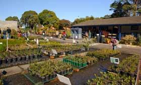 Randwick Community Nursery